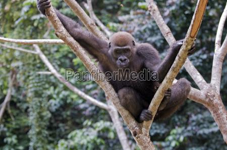 viaggio viaggiare colore albero parco animale