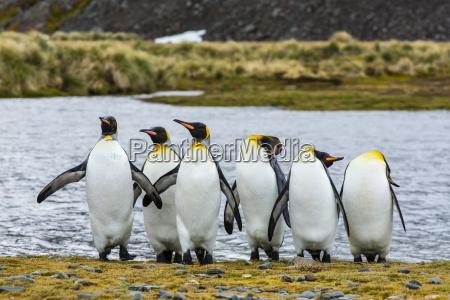 viaggio viaggiare uccello selvaggio orizzontale pinguino