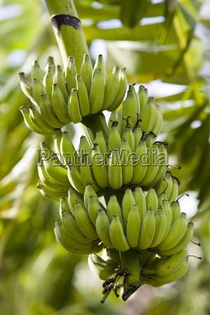 cibo colore albero flora botanica maturo
