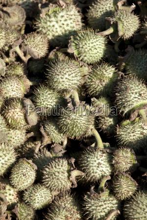 colore asia india frutta allaperto fuori