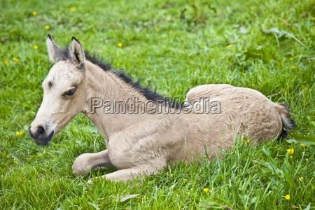 viaggio viaggiare colore cavallo animale animali