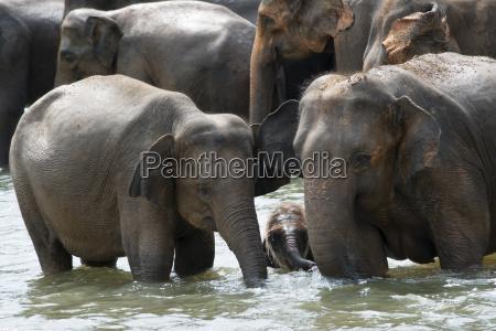 colore asia orizzontale allaperto fuori elefanti