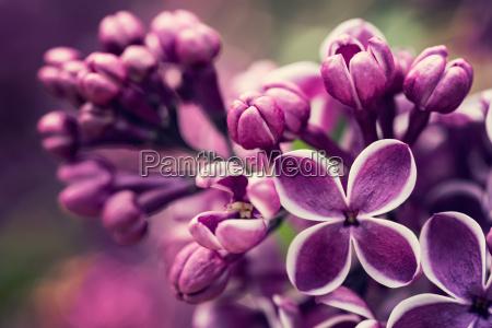 giardino fioritura fiorire fiore fiori primavera