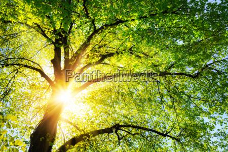 il sole splende caldo attraverso le