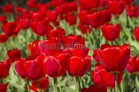 parco fiore pianta fioritura fiorire freschezza