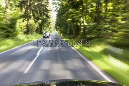movimento in movimento viaggio viaggiare albero