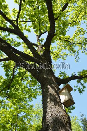 albero legno baviera ramo germania allaperto