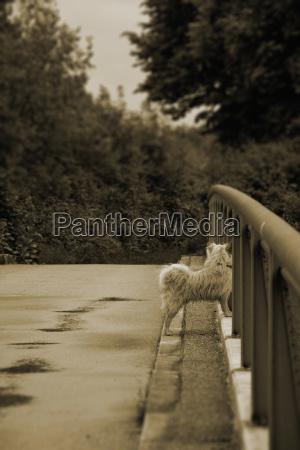 germania baviera dornach cane su un