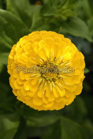 fiore pianta fioritura fiorire botanica baviera