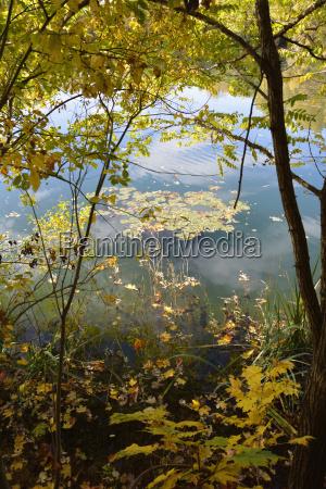 foglia albero foglie riflesso autunnale baviera