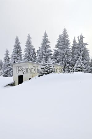 viaggio viaggiare albero inverno germania allaperto