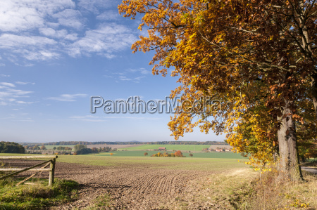 germany hesse farmland in autumn with