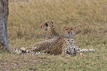 animale parco nazionale africa kenia allaperto