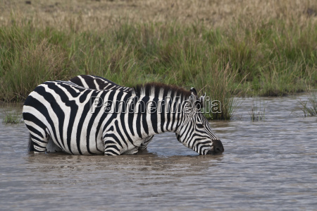kenya rift valley riserva nazionale di