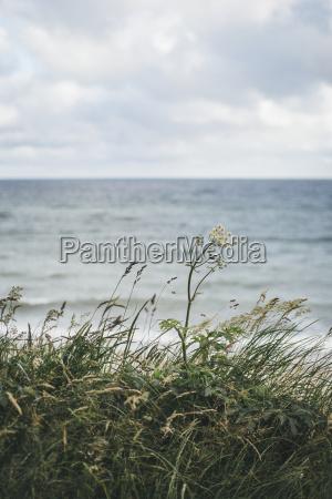 orizzonte acqua mar baltico acqua salata