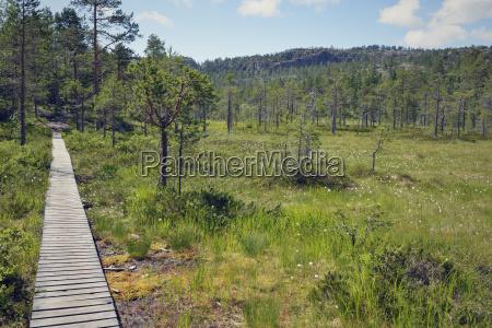 svezia oernskoeldsvik parco nazionale skuleskogen boardwalk