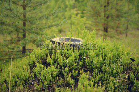 svezia stroemsund ceppo di albero circondato