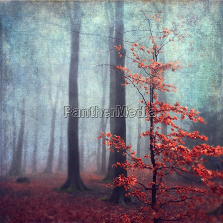 germany near wuppertal last leaves at