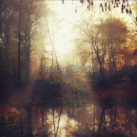 viaggio viaggiare albero parco riflesso luce