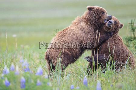 stati uniti damerica alaska parco nazionale