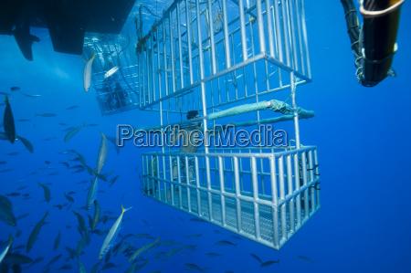 movimento in movimento animale pesce america