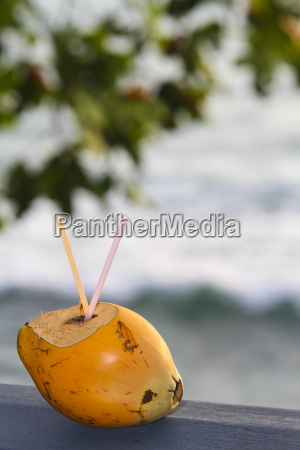 arancia viaggio viaggiare bere albero africa
