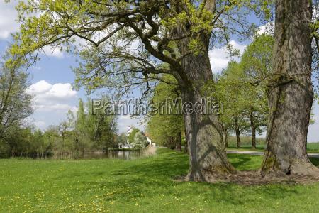 germany view of oak tree near