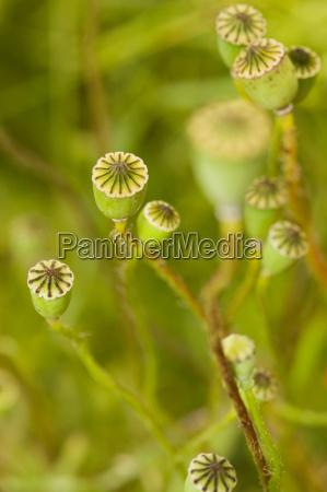 dettaglio fiore pianta botanica baviera tenerezza