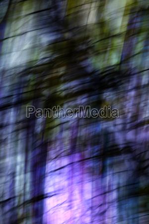 albero colorato autunnale allaperto fotografia foto