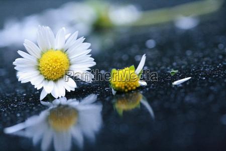 fiore pianta fioritura fiorire riflesso rotto