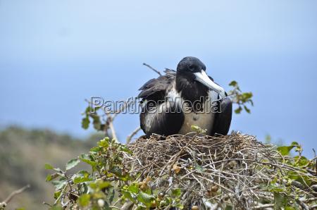 albero animale uccello allaperto fotografia foto