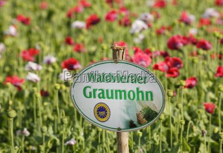 scrivere fiore pianta agricoltura campo austria