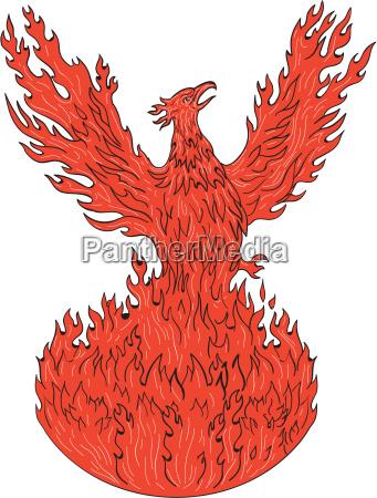 phoenix rising fiery flames drawing