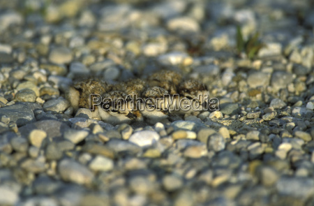 primo piano close up pietra sasso