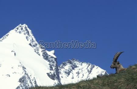 blu corno austria orizzontale congelato allaperto