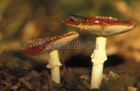 animale anfibio fauna orizzontale allaperto fotografia