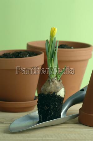 fiore pianta freschezza fotografia foto giorno