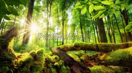 paesaggio forestale con bellissimi raggi solari