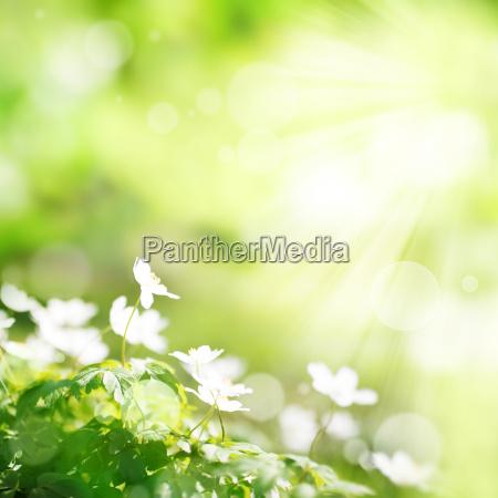luce verde soleggiato fiore fiori estate