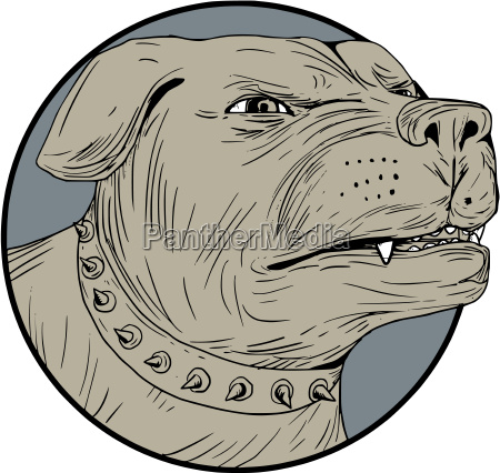 rottweiler guard dog head angry drawing