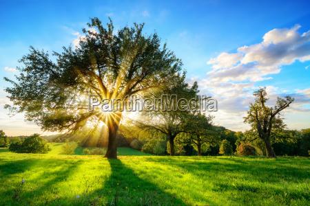 sun che lucida attraverso un albero
