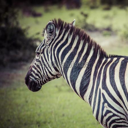 viaggio viaggiare parco cavallo animale mammifero