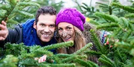 coppia divertimento vendita albero natale