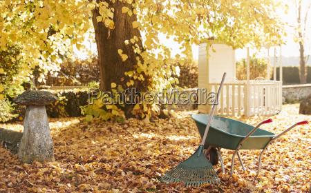 autumn garden scene with rake and