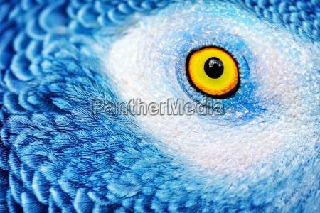 primo piano close up animale occhio