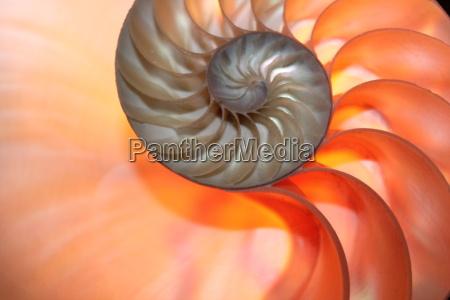 spazio croce conchiglia dorato simmetria spirale