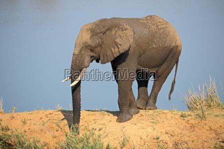 elefante zanna valigia valigie valigetta natura