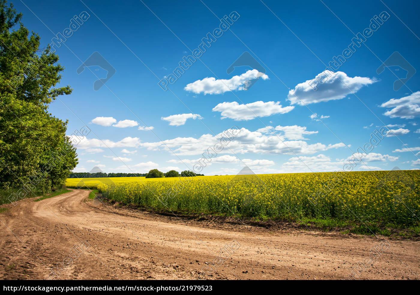 dirt, road, in, flowering, field, , beautiful - 21979523