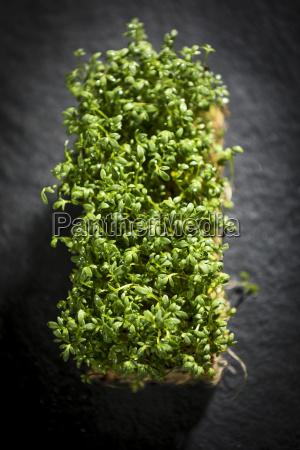 bio verde nero crescione aromatizzare condire