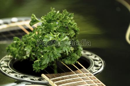 cibo musica verde nero chitarra corde